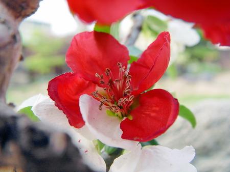 flower001-s.jpg