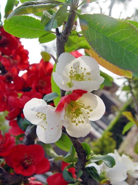 flower002-s.jpg
